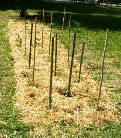Permaculture plantations